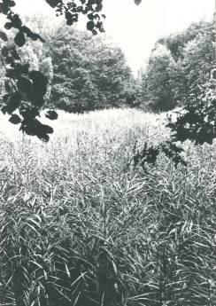 Verwachsener Weiher ca. 1960