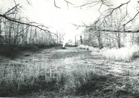 Weiher ca. 1960 nach der Rodung des Schilfes